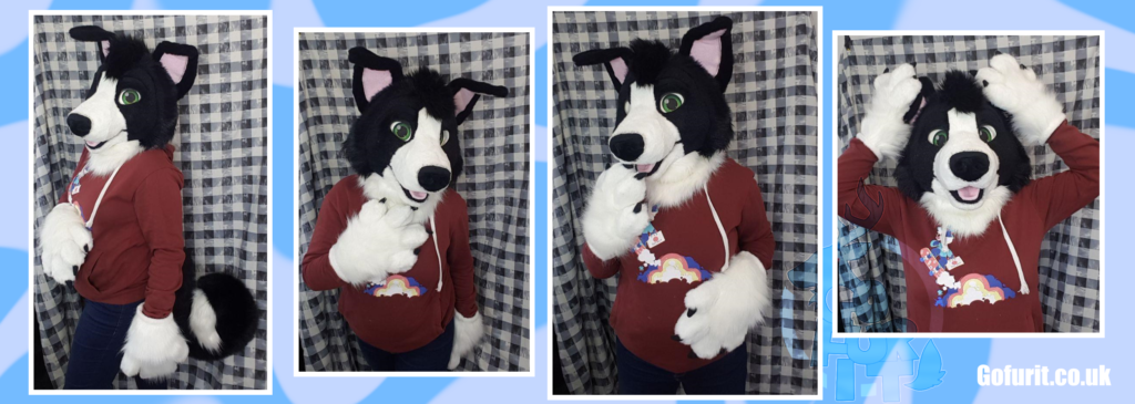 Border collie - Mini partial 2020